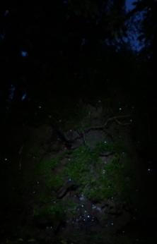 Fotos klein-51